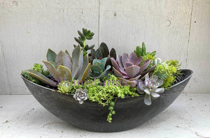 Wed-Oct 07- 2020 ^  Succulent Bowl